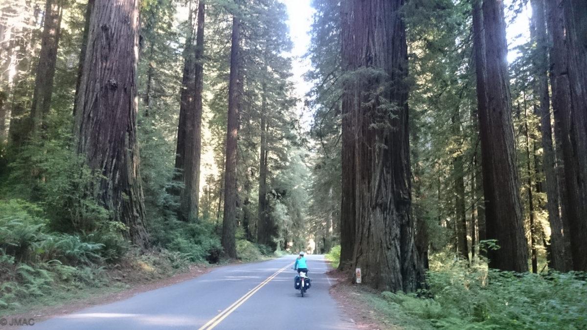 In den Redwoods