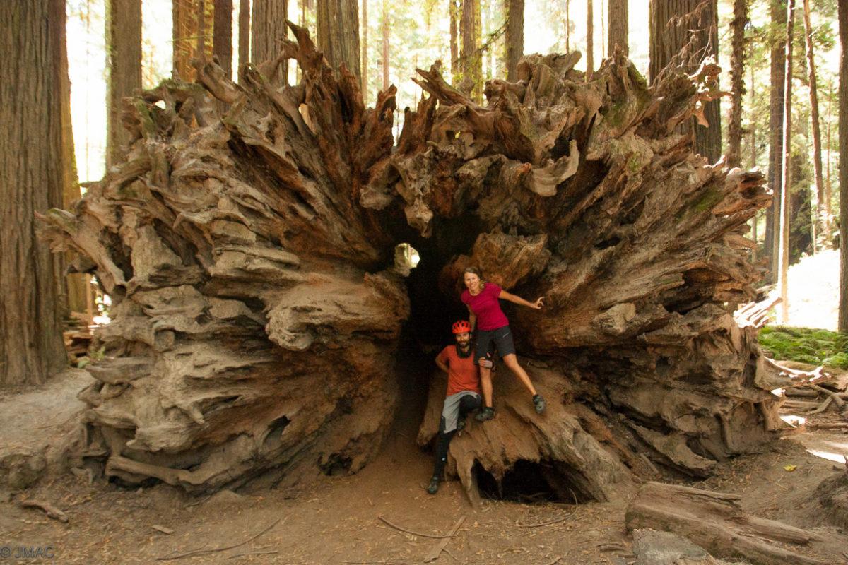 Im Redwood Nationalpark