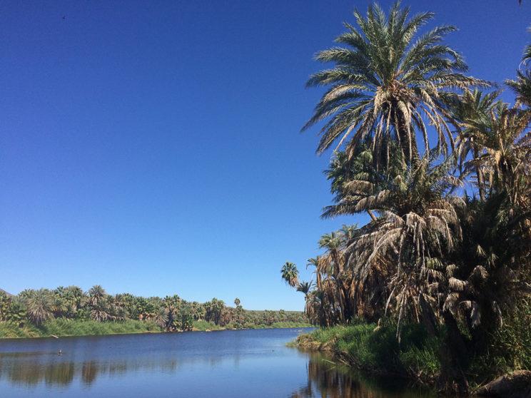 Eine richtige Oase in der Wüste! San Ignacio