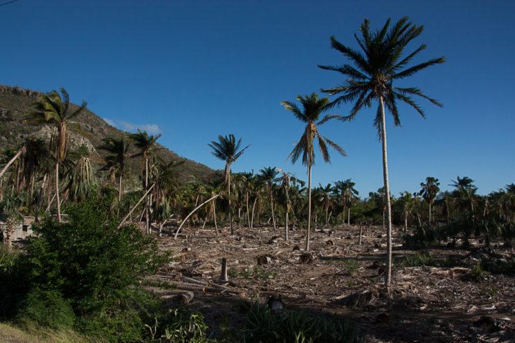 Zerstörter Wald in Baracoa