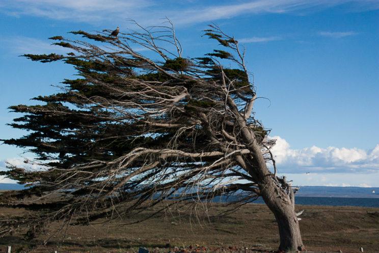 Ganz so stark hat uns der Wind dann doch nicht zugesetzt...