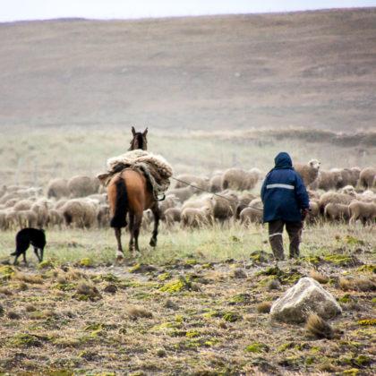 Schafherde mit Hirt und Hund